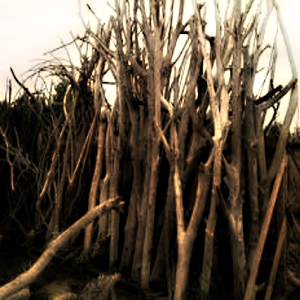 branche bois arte POVERA